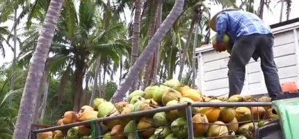 Empresa de producción y comercialización del agua de coco que ofrece ventajas a la salud al consumidor mexicano
