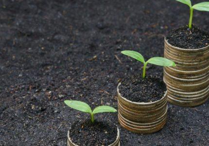 Sin crédito no hay crecimiento.